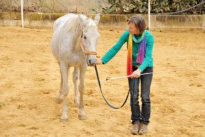 Tellington Bodenarbeit Pferd