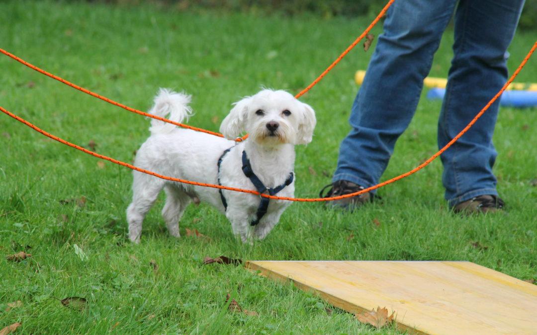 Hunde-Bodenarbeit mit Spaß und Cavalettis