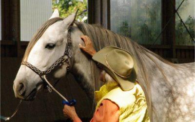 Der Zertifikatslehrgang zum Coach und Practitioner der Tellington TTouch Methode für Pferde