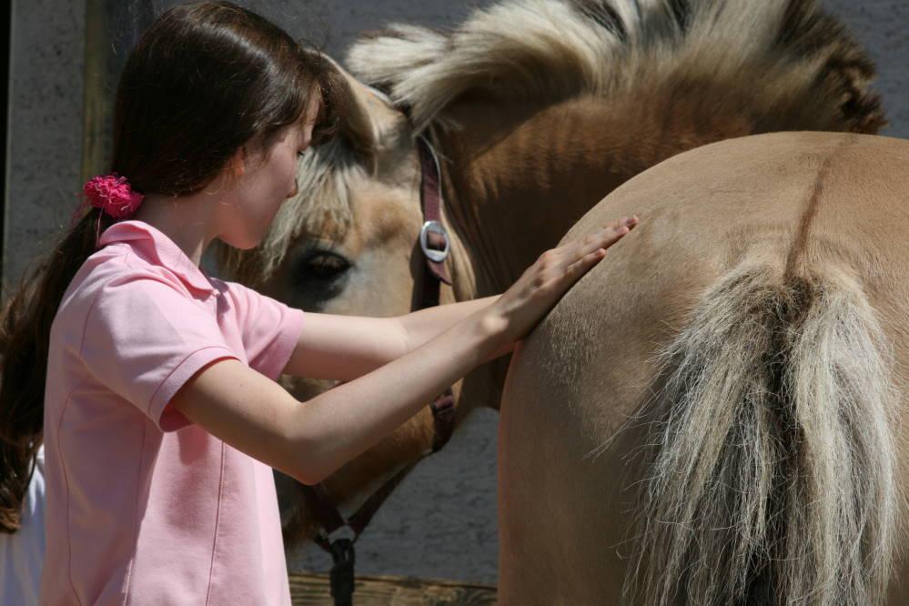 Warum TTouch in tiergestützten Interventionen so beliebt ist