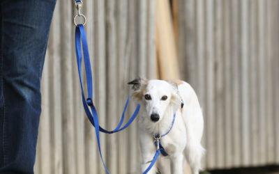 Warum ein Brustgeschirr für Hunde? Und wofür die Zweipunktführung?