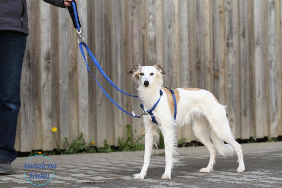 TTouch 20-2 für Hunde und Kleintiere