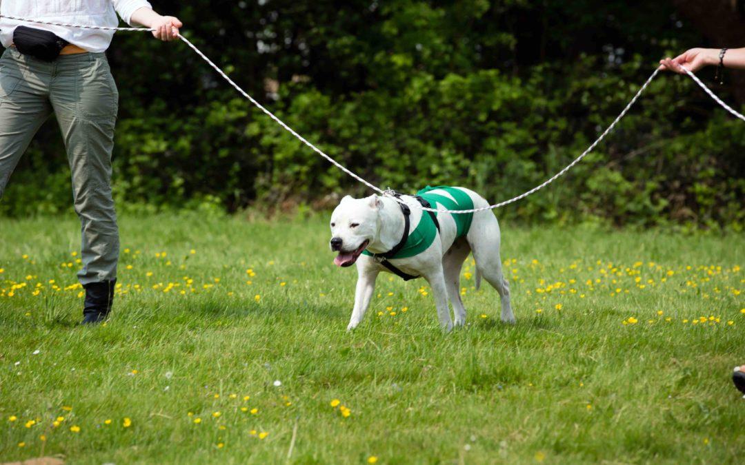 Hunde, Seil und Partner*in