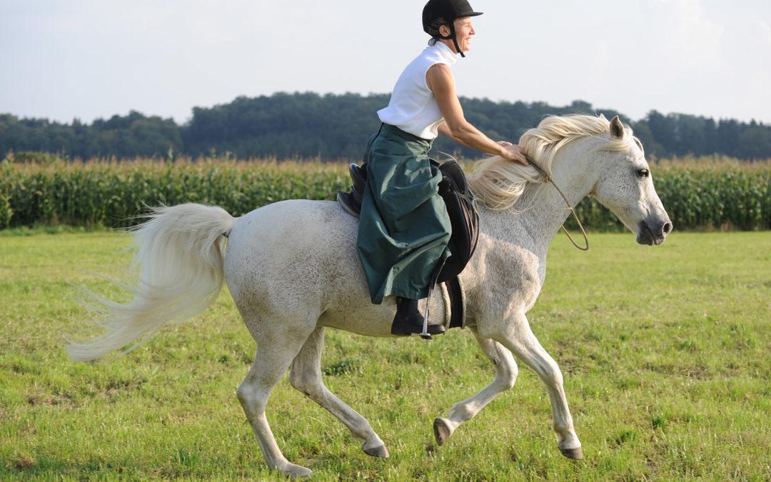 Tellington TTouch für Pferde 20–1