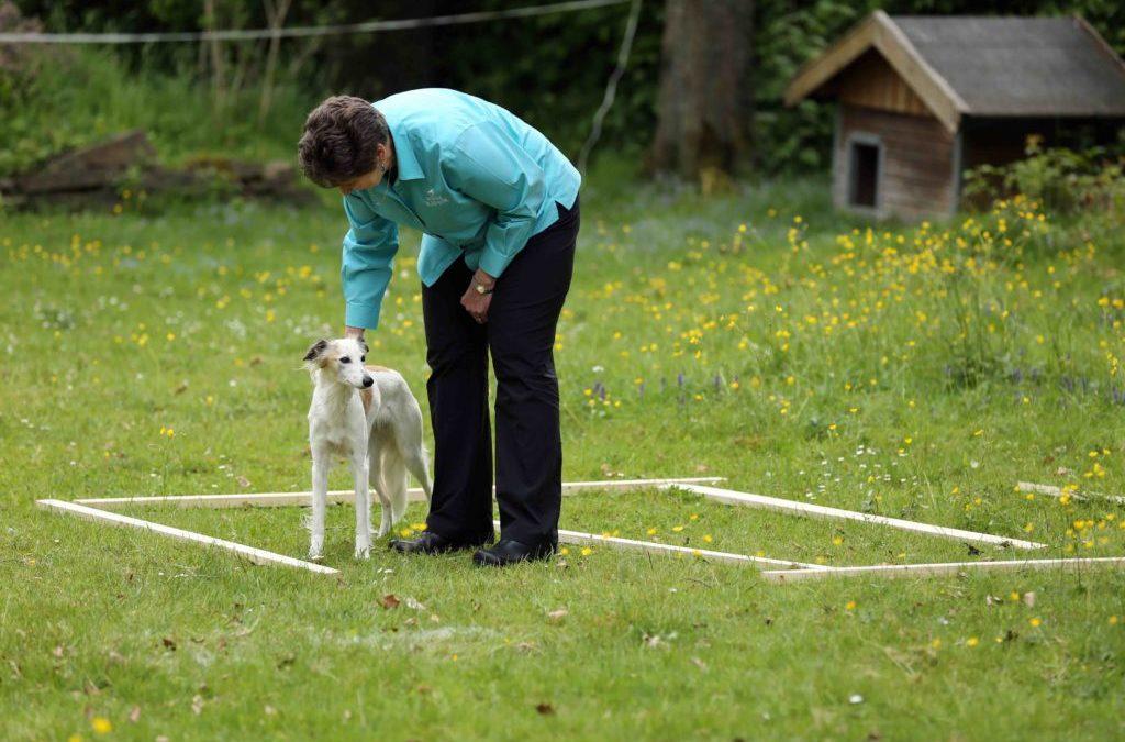 Tellington TTouch für Hunde und Kleintiere 20–1