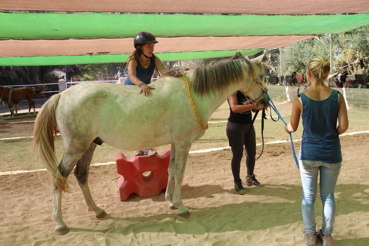 TTEAM 21-1 Jungpferde-Kurs mit Bibi Degn