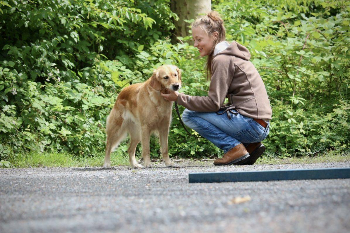 Tellington TTouch für Hunde - …mehr sehen, mehr fühlen, mehr bewirken!