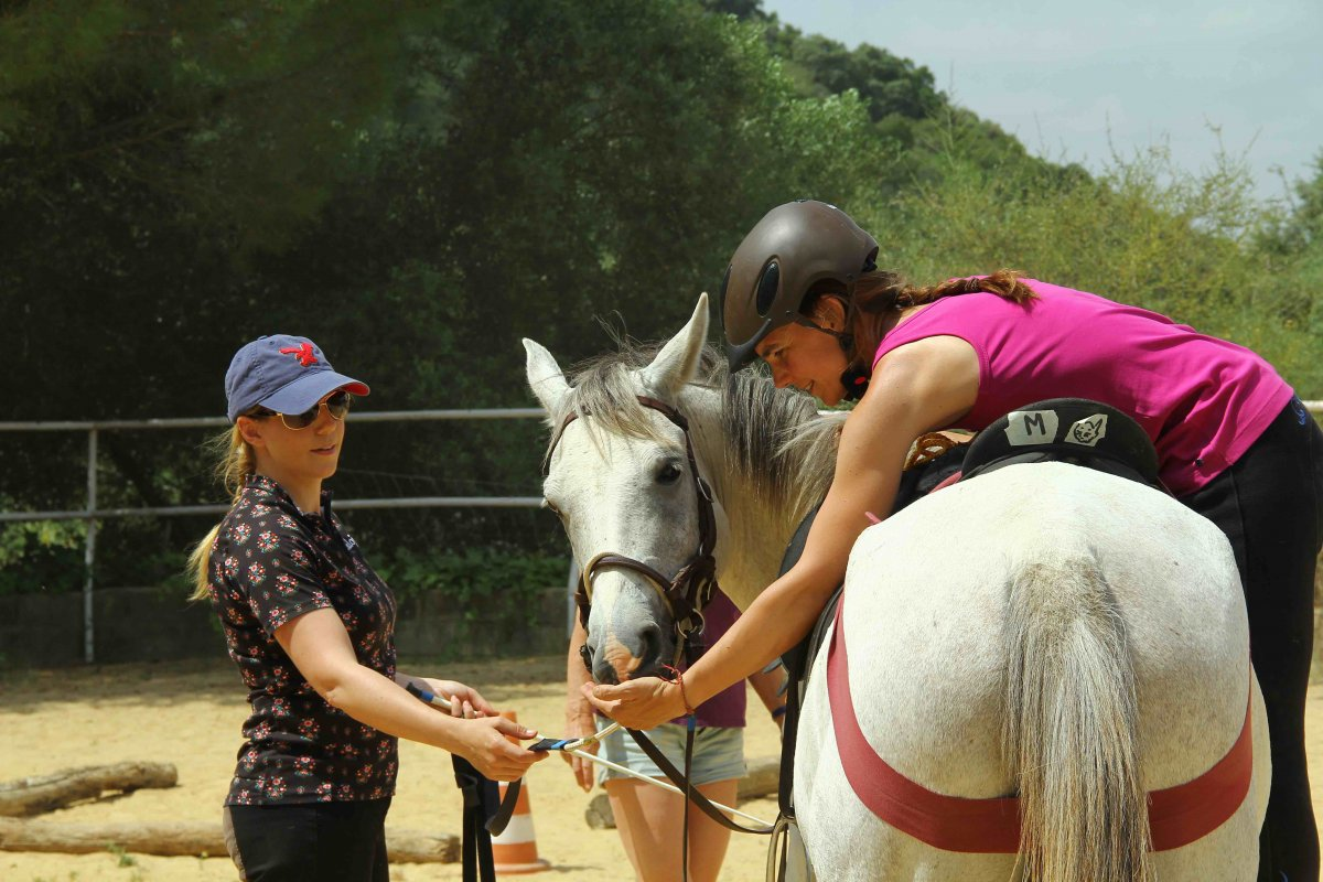 Online - Lehrgang   Jungpferde - Ausbildung
