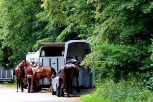 online-Kurse Tiere-Akademie Verladetraining
